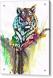 Mellow Kitty Acrylic Print by Howard Barry