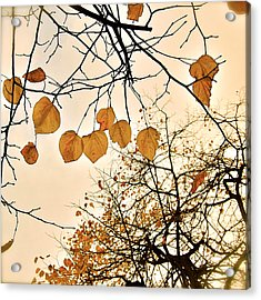 Mellow Touch Acrylic Print by HweeYen Ong