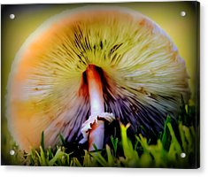 Mellow Yellow Mushroom Acrylic Print by Karen Wiles
