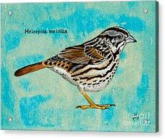 Melospiza Melodia Acrylic Print
