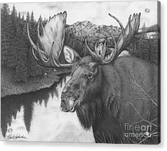 Melozi River Moose Acrylic Print