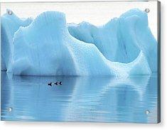 Melting Arctic Iceberg Acrylic Print