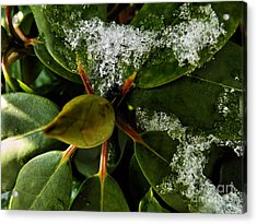 Acrylic Print featuring the photograph Melting Crystals by Robyn King