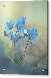 Memories Of A Spring Acrylic Print