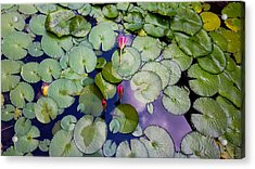 Memories Of Monet Acrylic Print by Barbara Chichester