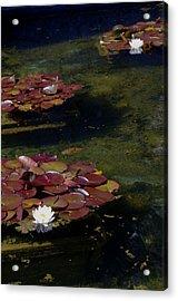 Memories Of Monet Acrylic Print by Marilyn Wilson
