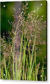 Memories Of Springtime Acrylic Print by Holly Kempe