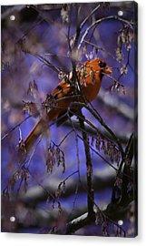Memphis Red Bird Acrylic Print by Barry Jones