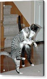 Meow Vows Acrylic Print