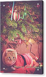 Meowy Christmas Acrylic Print by Melanie Lankford Photography
