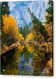 Merced River And Leaning Pine Acrylic Print by Terry Garvin