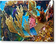 Mermaid And Snorkeler Acrylic Print by Paula Porterfield-Izzo