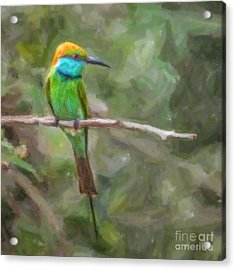 Merops Orientalis Little Green  Bee-eater Acrylic Print