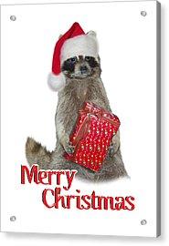 Merry Christmas -  Raccoon Acrylic Print by Gravityx9 Designs