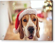 Merry Christmas Acrylic Print by Aleksandarnakic