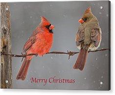 Merry Christmas Cardinals Acrylic Print