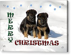 Merry Christmas Puppies Acrylic Print
