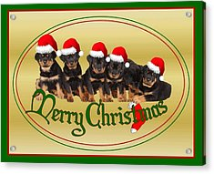 Merry Christmas Rottweiler Puppies Greeting Card Acrylic Print by Tracey Harrington-Simpson
