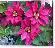 Merry Christmas To You Acrylic Print by Lingfai Leung