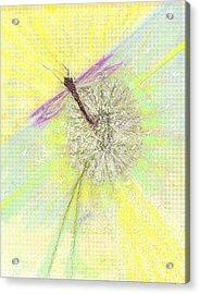 Mesmerism Acrylic Print by Desline Vitto