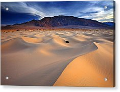 Mesquite Gold Acrylic Print by Darren  White