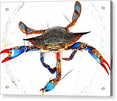 Mess With Me............sold. Acrylic Print by Antonia Citrino
