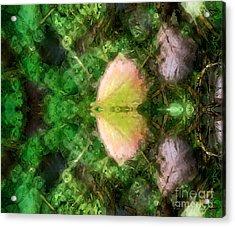 Metamorphosis 1  Acrylic Print