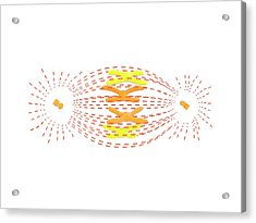 Metaphase In Cell Division Acrylic Print