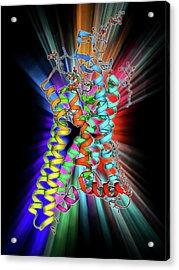 Metarhodopsin Molecule Acrylic Print by Laguna Design