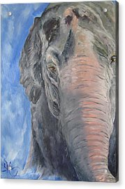 The Elder, Methai An Elephant Acrylic Print