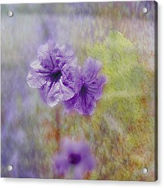 Acrylic Print featuring the photograph Mexican Petunia by Judy Hall-Folde
