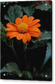 Acrylic Print featuring the photograph Mexican Sunflower by James C Thomas