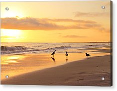 Mexico Beach Sand Pipers Acrylic Print