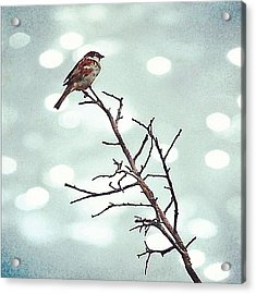 #mgmarts #bird #nature #life #bestpic Acrylic Print by Marianna Mills