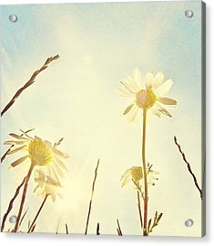 #mgmarts #daisy #all_shots #dreamy Acrylic Print