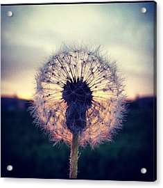#mgmarts #dandelion #sunset #simple Acrylic Print