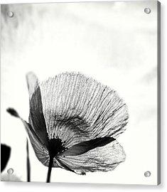 #mgmarts #poppy #summer #spring #sunny Acrylic Print by Marianna Mills
