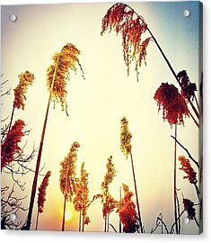 #mgmarts #sunset #bright #beautiful Acrylic Print