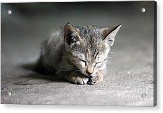 Miau Acrylic Print by Jan Wolf
