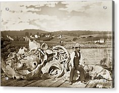 Michael Noon Sitting On A  Pile Of Whale Bones Monterey Wharf  Circa 1896 Acrylic Print