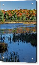 Michigan, Hiawatha National Forest, Doe Acrylic Print