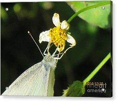 Micro Photography Acrylic Print
