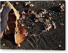 Acrylic Print featuring the photograph Microcosmic by Rhys Arithson