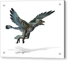 Microraptor Dinosaur Acrylic Print