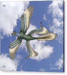 Microraptor Acrylic Print by Spencer Sutton