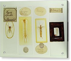 Microscope Slides Acrylic Print by Science Photo Library
