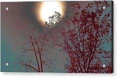 Mid-afternoon Sun Acrylic Print