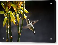 Midday Snack Acrylic Print by Swift Family