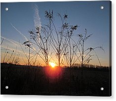 Middle Of The Field Sunrise Acrylic Print