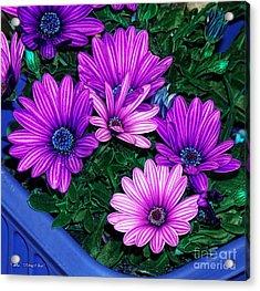 Midnight Blue Acrylic Print by Mo T